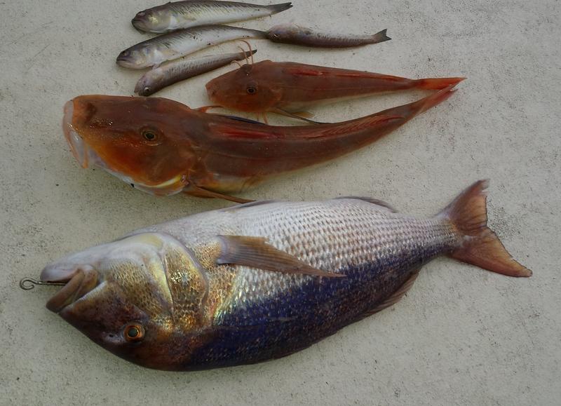 Vertical jigging checco sa si pesca for Cucinare branzino 5 kg